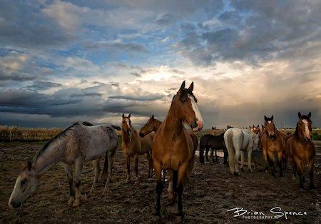 Pretty Pony's