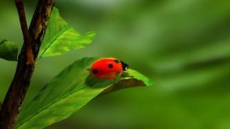 abundance of luck lady bug