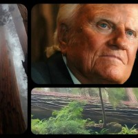 BILLY GRAHAM: THE FALL OF GIANT A REDWOOD TREE