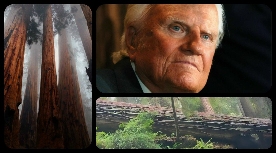 Billy Graham: Fall of the Redwood Tree