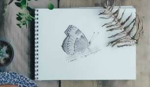 Sketch Butterfly